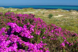 Sardinia history 2