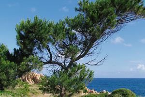 Sardinia nature 4