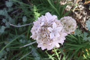 Sardinia nature 5